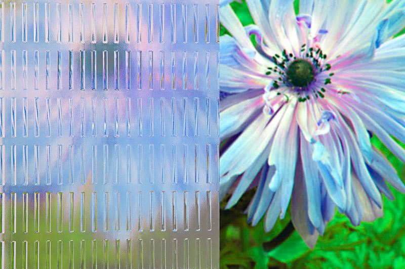 decorative ornamental glass master ray